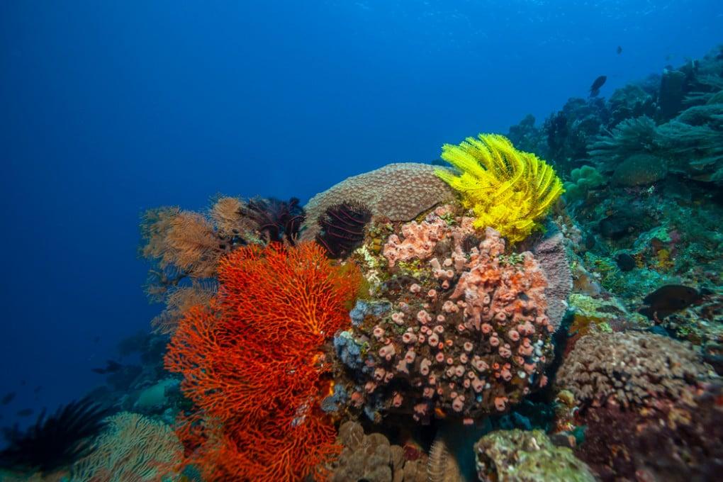 I batteri, ancora affamati, sono stati rinvenuti nel fango depositato sotto i fondali del Pacifico.