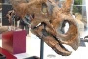Osteosarcoma, il tumore osseo del dinosauro