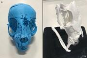 Antico Egitto: tre animali mummificati ricostruiti in 3D