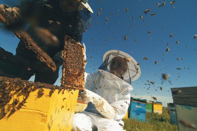L'uomo alleva le api da almeno 9.000 anni.