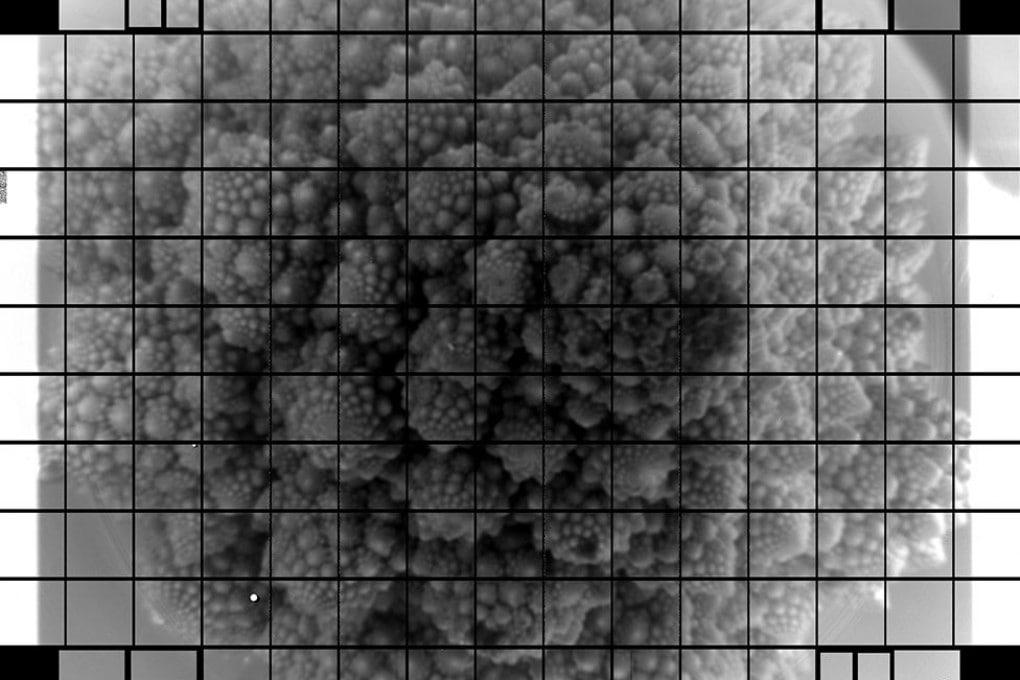Una foto estremamente dettagliata di un broccolo romanesco: i grandi progetti astronomici iniziano anche così.