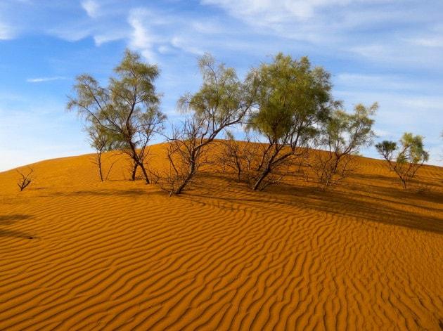 Alberi nel deserto del Sahara