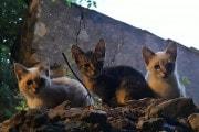 Il vostro gatto va a caccia? Mette a rischio la biodiversità!