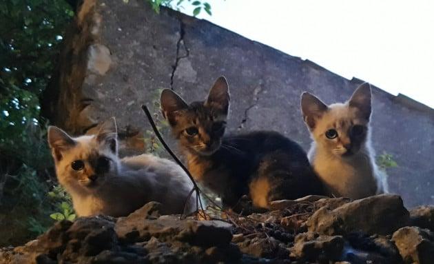 Gatti: piccole tigri in agguato