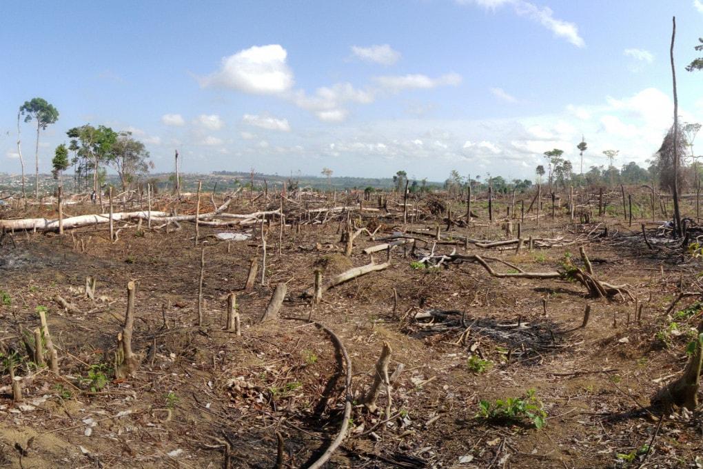 deforestazione: foresta amazzonica brasiliana