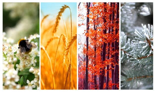 Le quattro stagioni? Da un punto di vista biologico sono solo due