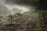 Gas serra: crescono le emissioni di ossidi d'azoto