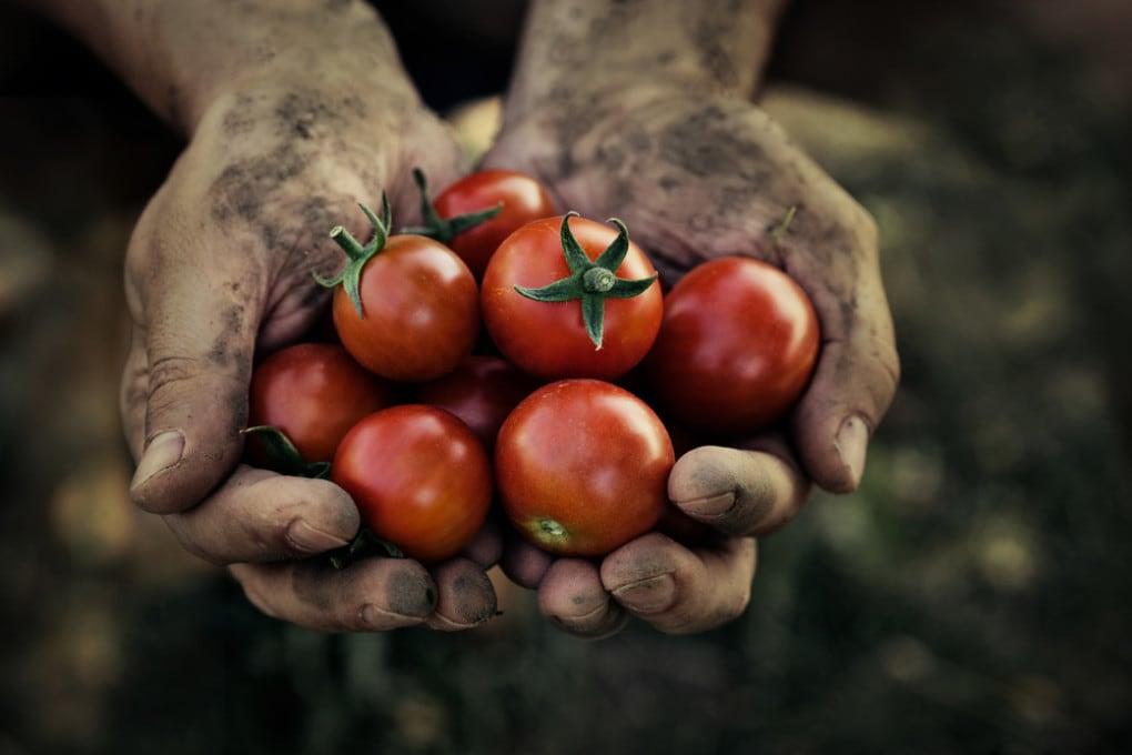 Giornata mondiale dell'alimentazione 2020