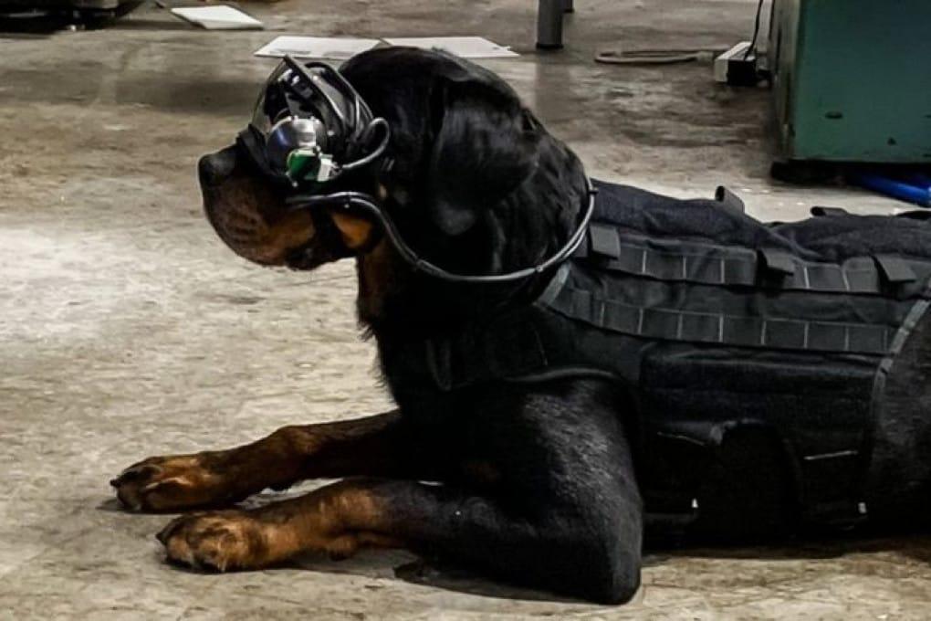 In situazioni a rischio i cani dell'esercito Usa saranno guidati con la realtà aumentata