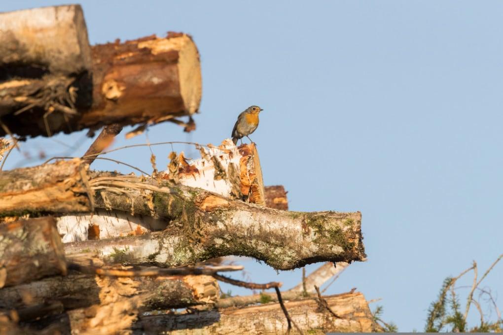 La deforestazione:  in 10 anni la Terra ha perso 25 milioni di ettari ricoperti da alberi.