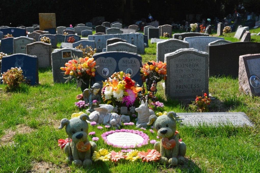 Un cimitero per cani degli Stati Uniti.