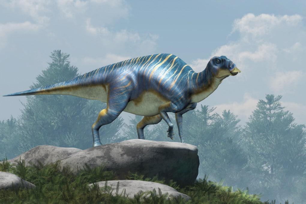 Adrosauride (genere Maiasaura), un dinosauro a becco d'anatra.