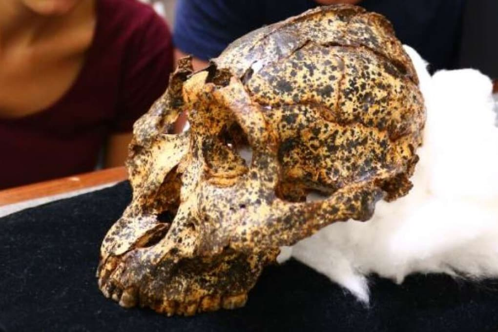 Sconvolgimenti climatici provocarono cambiamenti anatomici nel Paranthropus robustus a lungo attribuiti alle differenze sessuali.