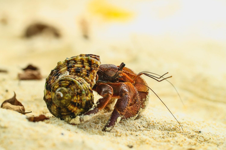 Un paguro su una spiaggia in Thailandia.