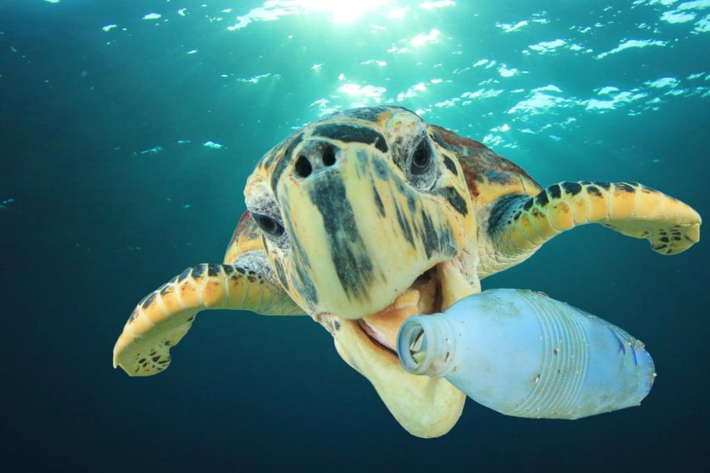 Una bottiglia in plastica e uno strano essere marino che l'aggredisce.