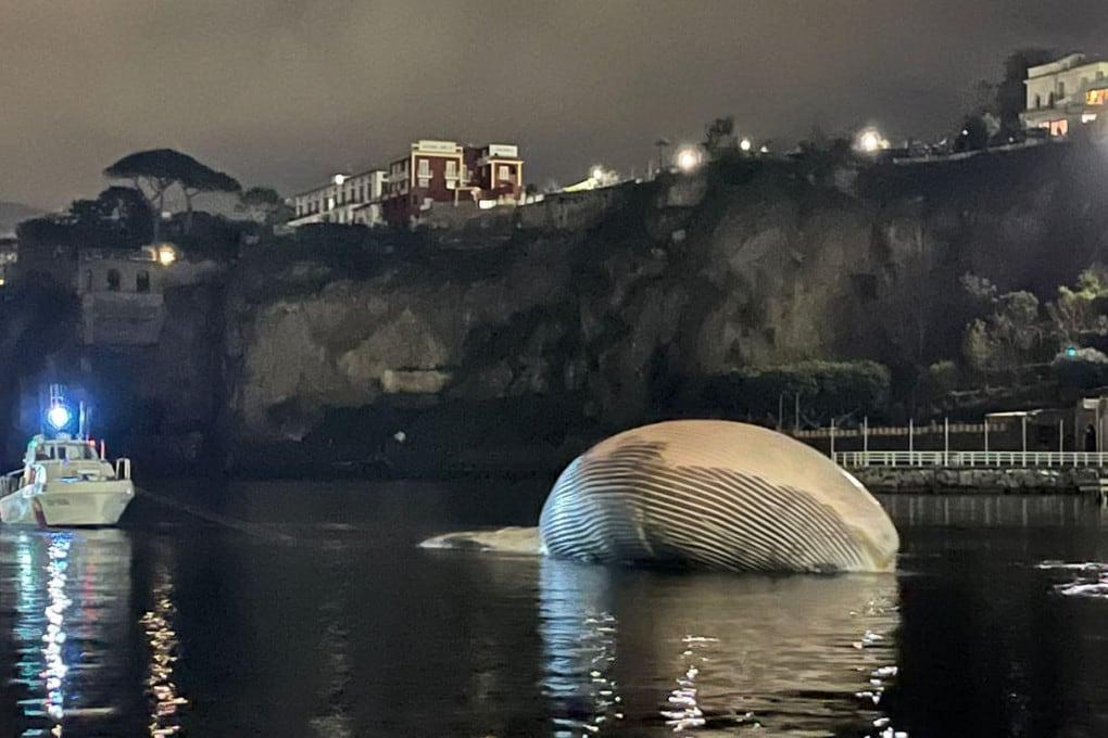 La balenottera ritrovata al largo di Sorrento.