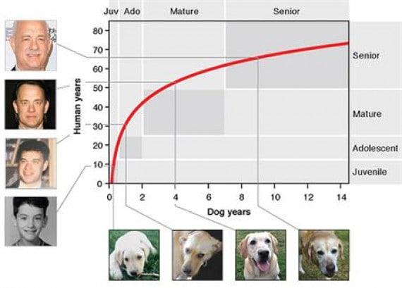 Il grafico per calcolare l'età dei cani