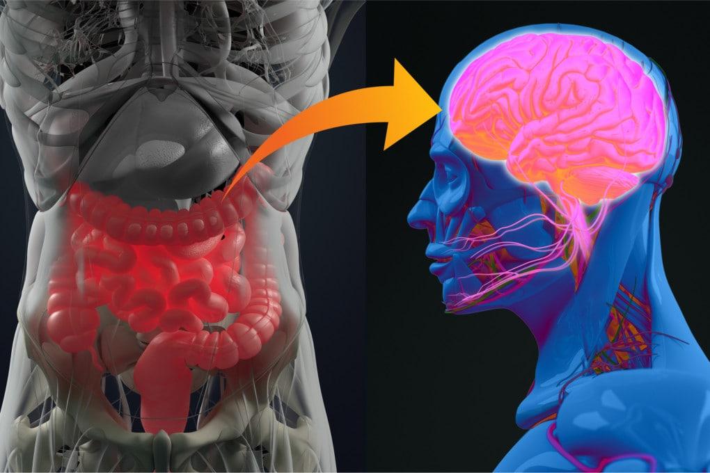Il legame tra intestino e cervello è tanto innegabile quanto misterioso.