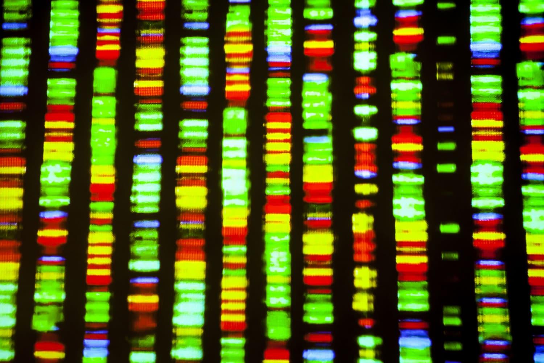 Il sequenziamento del genoma umano, 20 anni fa