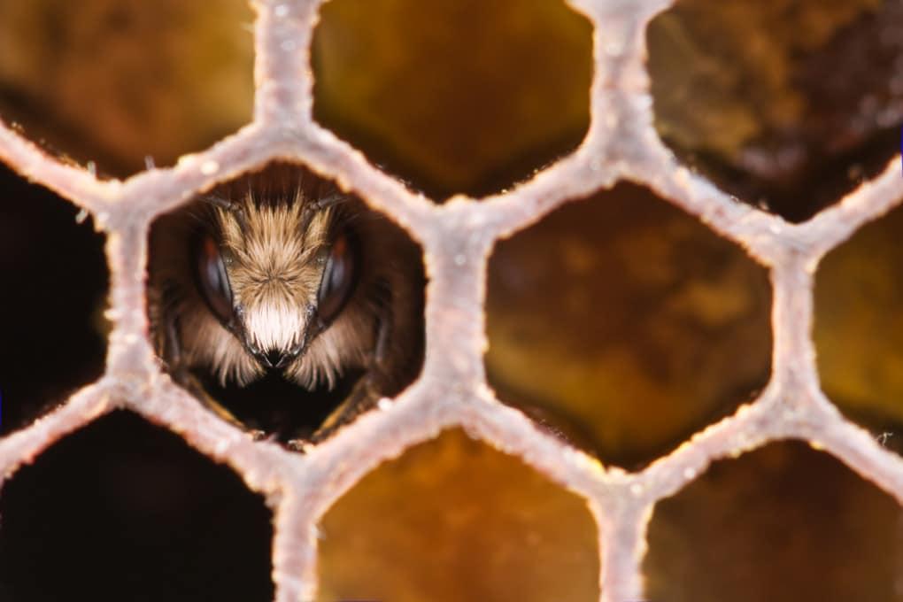 Incontro ravvicinato con le api, a casa loro.