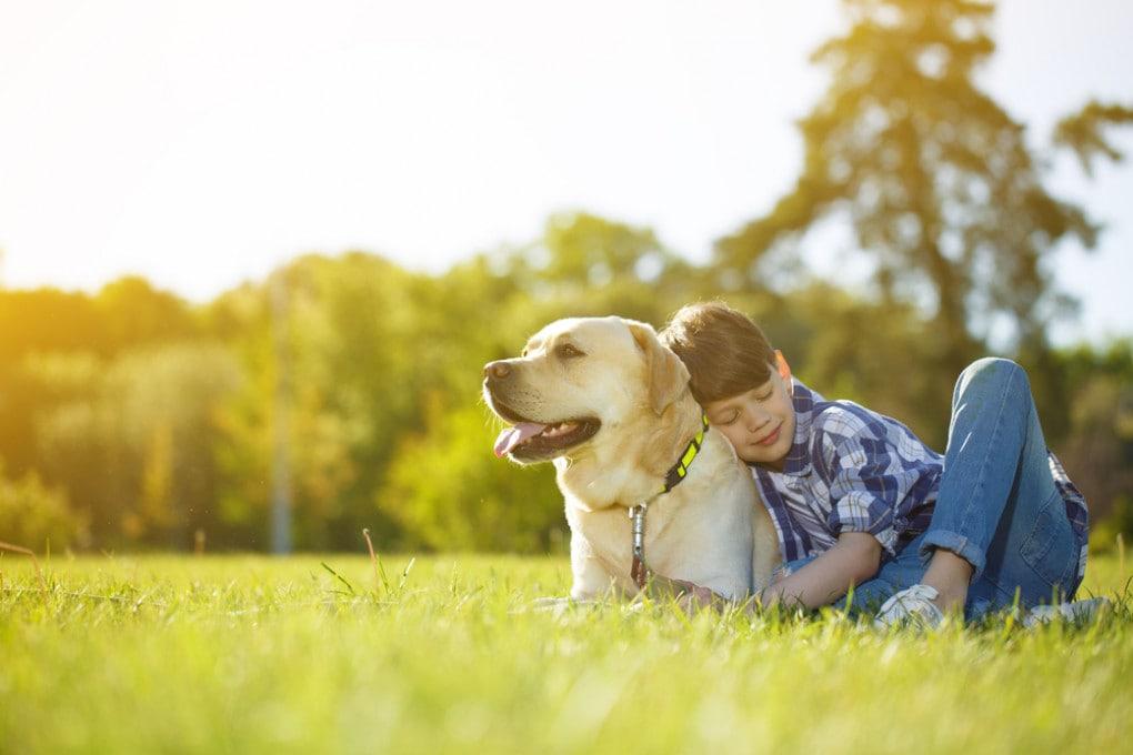 Cane con padrone in campagna