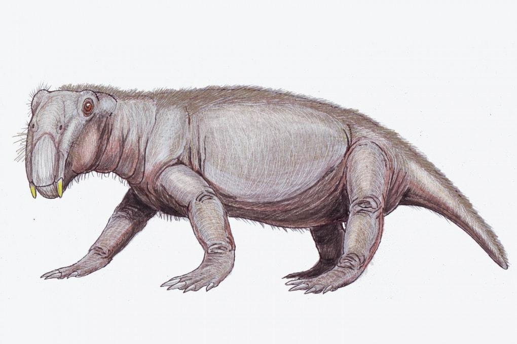 Illustrazione: un Lystrosaurus. È uno dei pochi superstiti all'estinzione del Permiano, probabilmente favorito dalle piccole dimensioni: sulla base dei resti fossili era lungo in media da 50 cm a 1 metro.