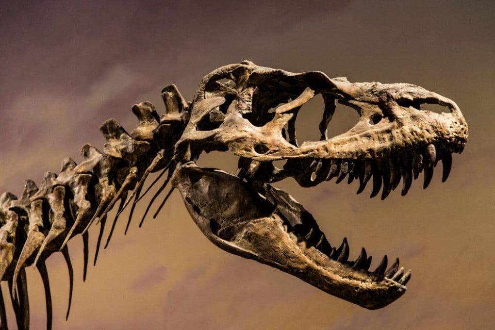 Morso del T. rex: tritacarne fossile.