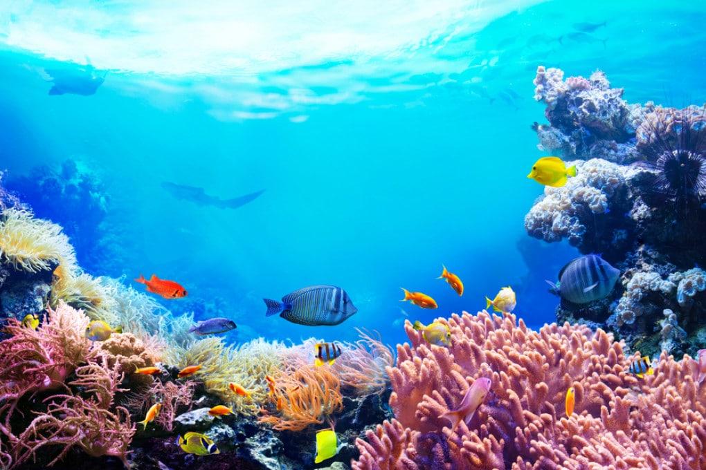 Più si va in profondità negli oceani, più i colori si fanno smorti.