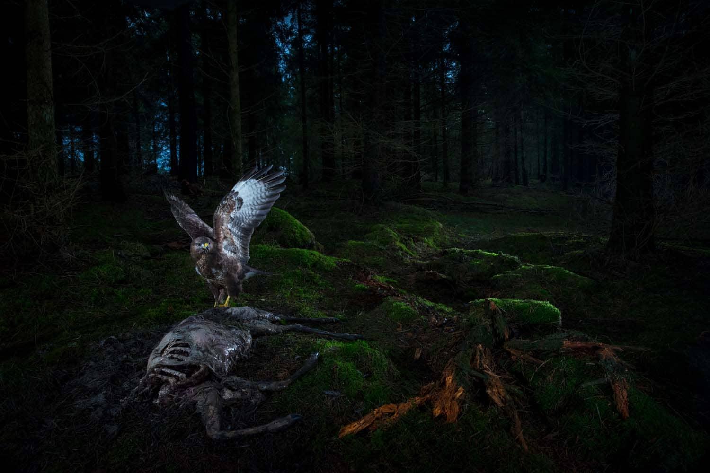 Natën në pyll.