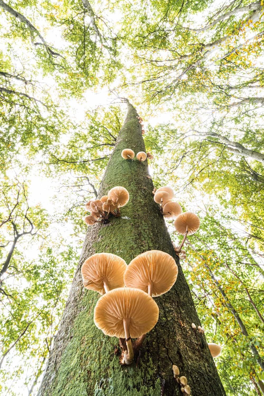 Kërpudha në një ah