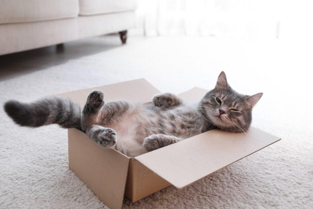 Gatto in scatola.