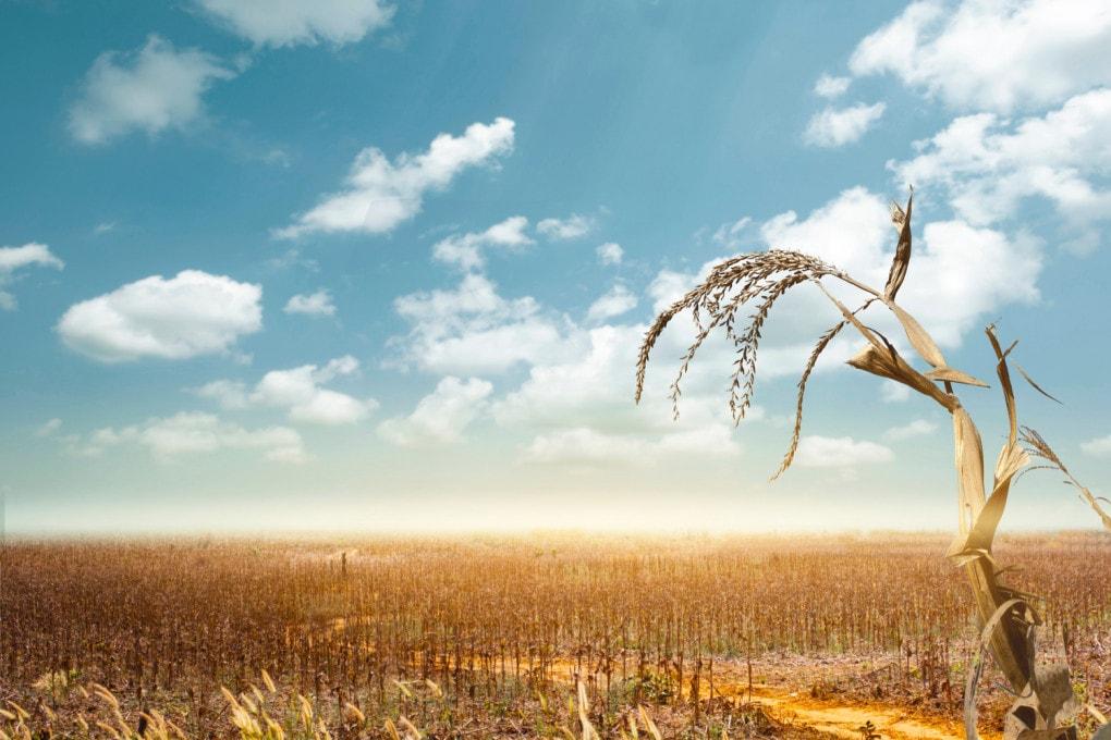 cambiamento climatico e produzione alimentare