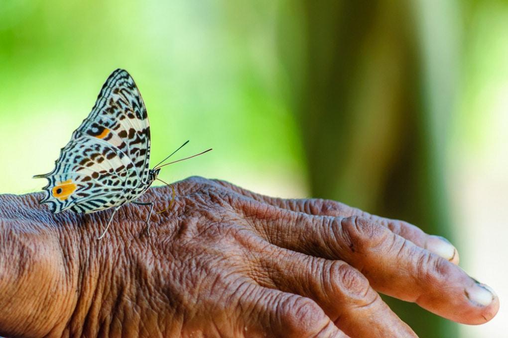 Trasformarci in custodi della biodiversità è l'unico modo per arrestare la perdita di ricchezza biologica.