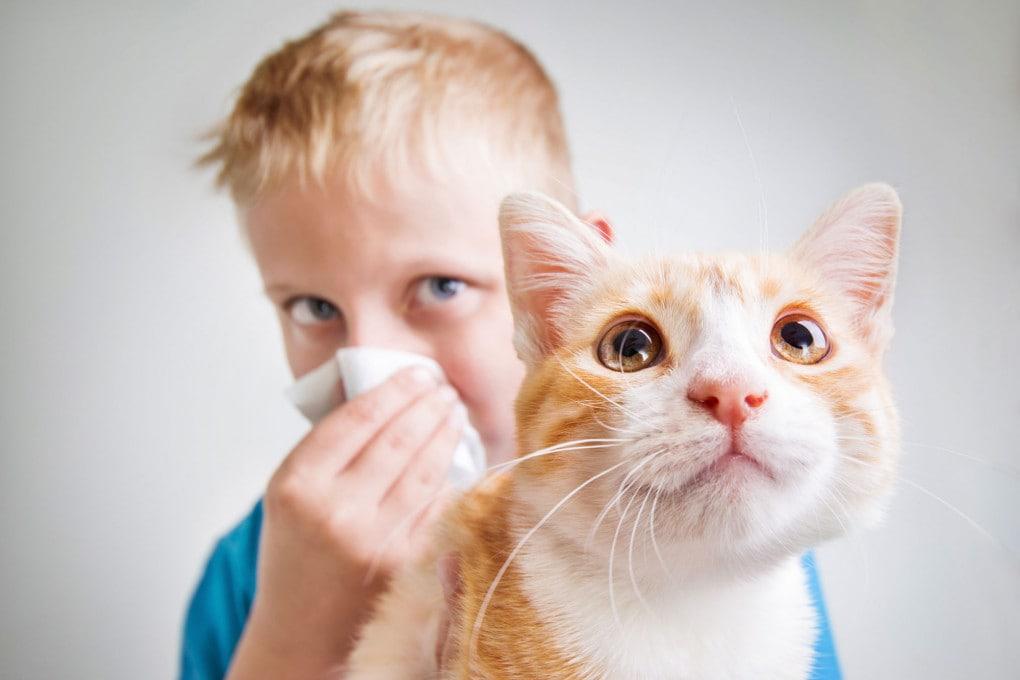 Perché alcuni sono allergici ai gatti?