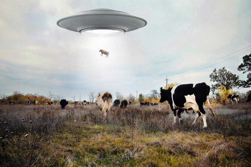 Agli UFO piacciono i bovini della Terra