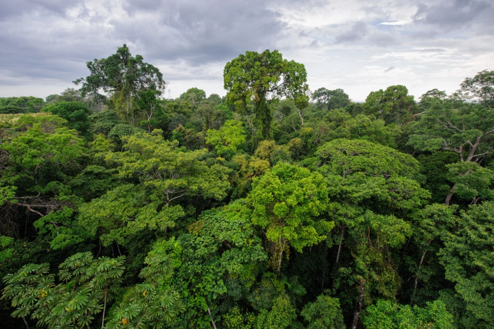 Foresta amazzonica a Tambopata, in Perù.