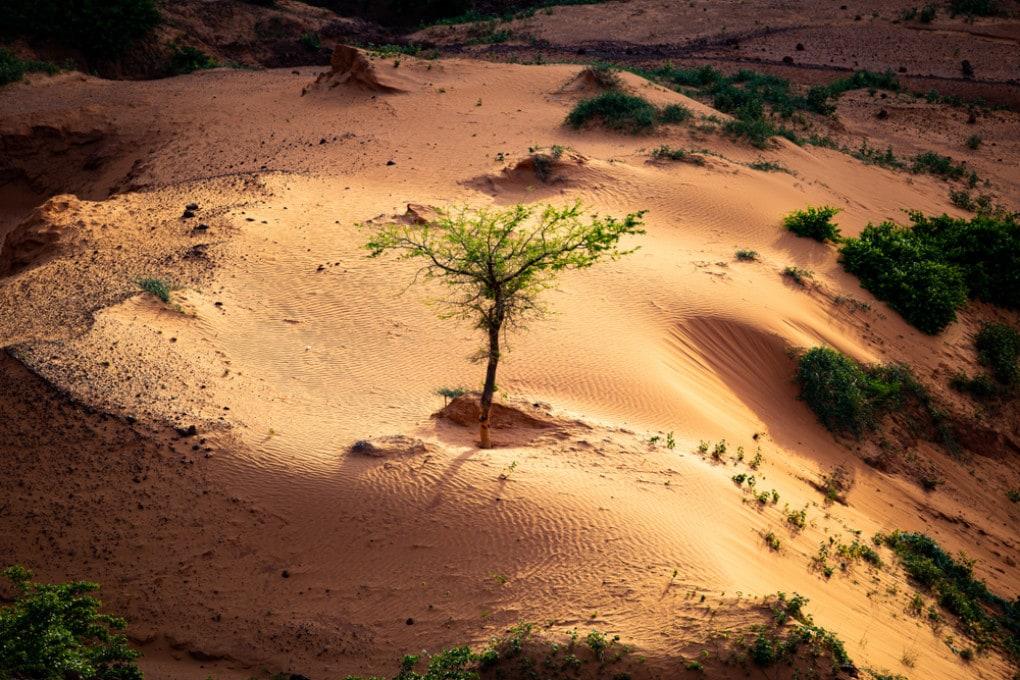 Un albero oppone resistenza al deserto nel Sahel nigeriano, la fascia di transizione tra le zone desertiche e quelle coperte dalla vegetazione
