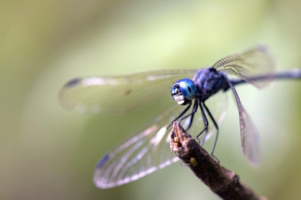 Il declino degli insetti tropicali: colpa delle dighe?