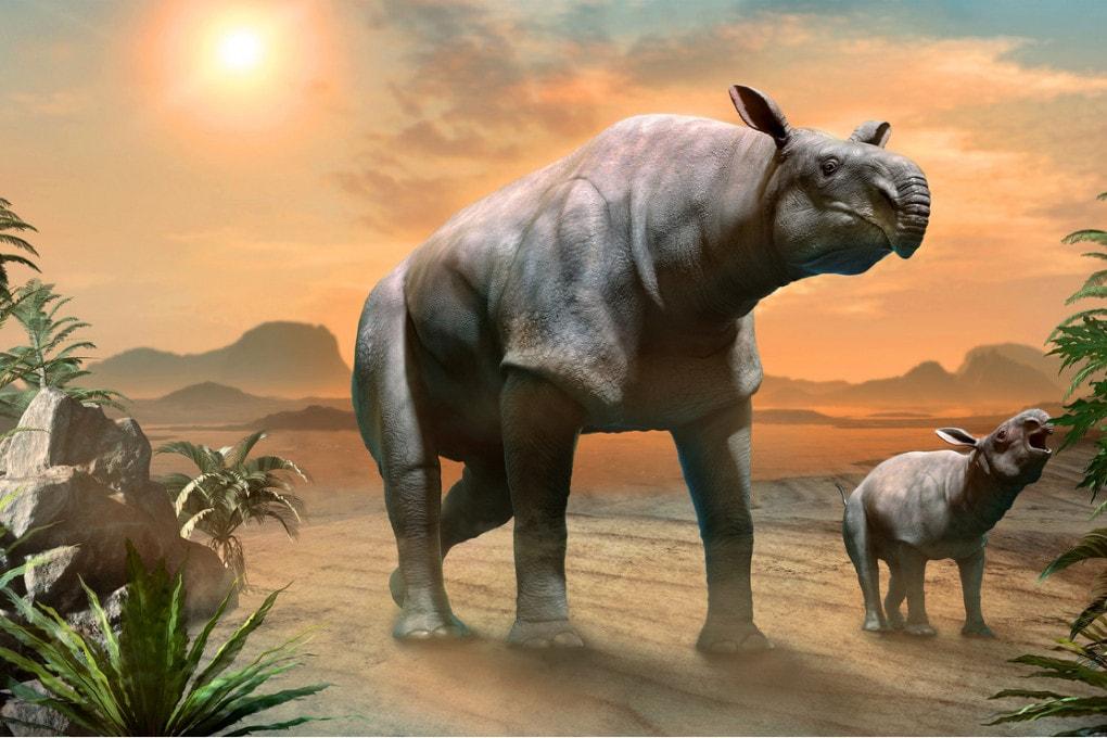 Il gigantesco antenato dei rinoceronti