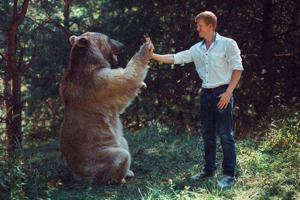 Orso e uomo: una convivenza possibile?