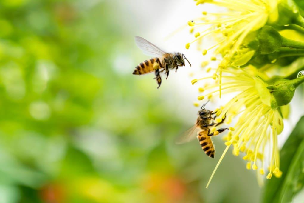 Nel mondo ci sono quasi 20.000 specie di api.  E ciascuna di queste ha le sue preferenze in termini di cibo.