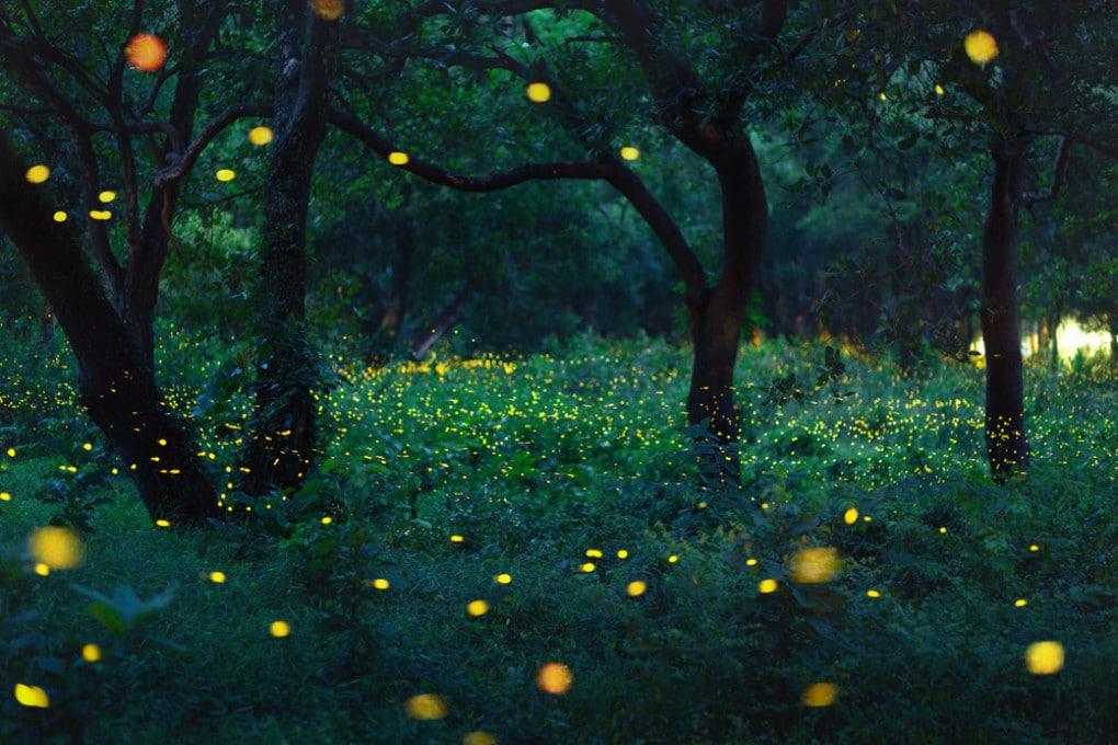 Il meraviglioso spettacolo delle lucciole.