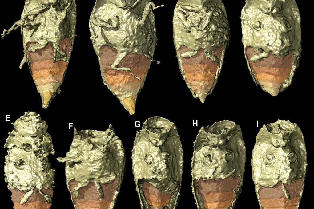 I resti di coleotteri nei coproliti del Triassico.