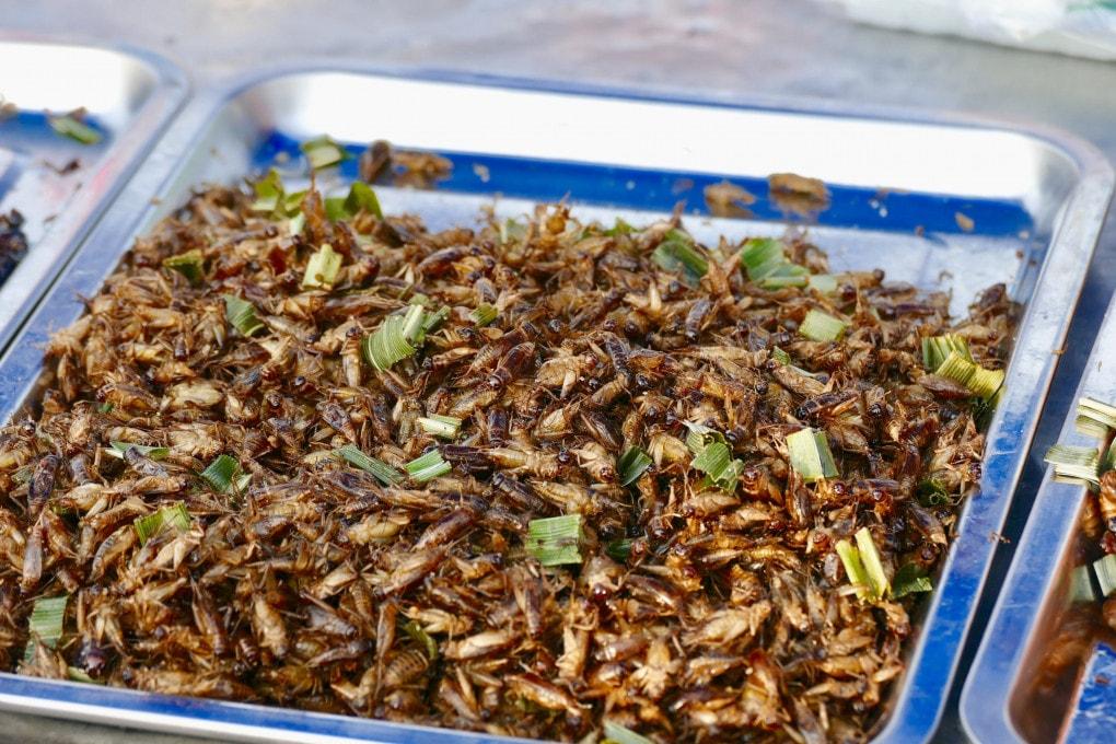 E per pranzo? Una bella porzione di insetti in insalata. Ricchi di proteine e a basso impatto ambientale.