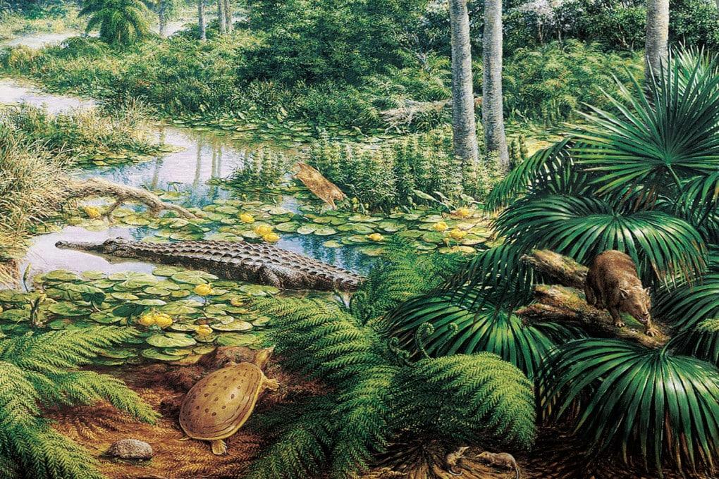 Illustrazione: una foresta del Paleocene.