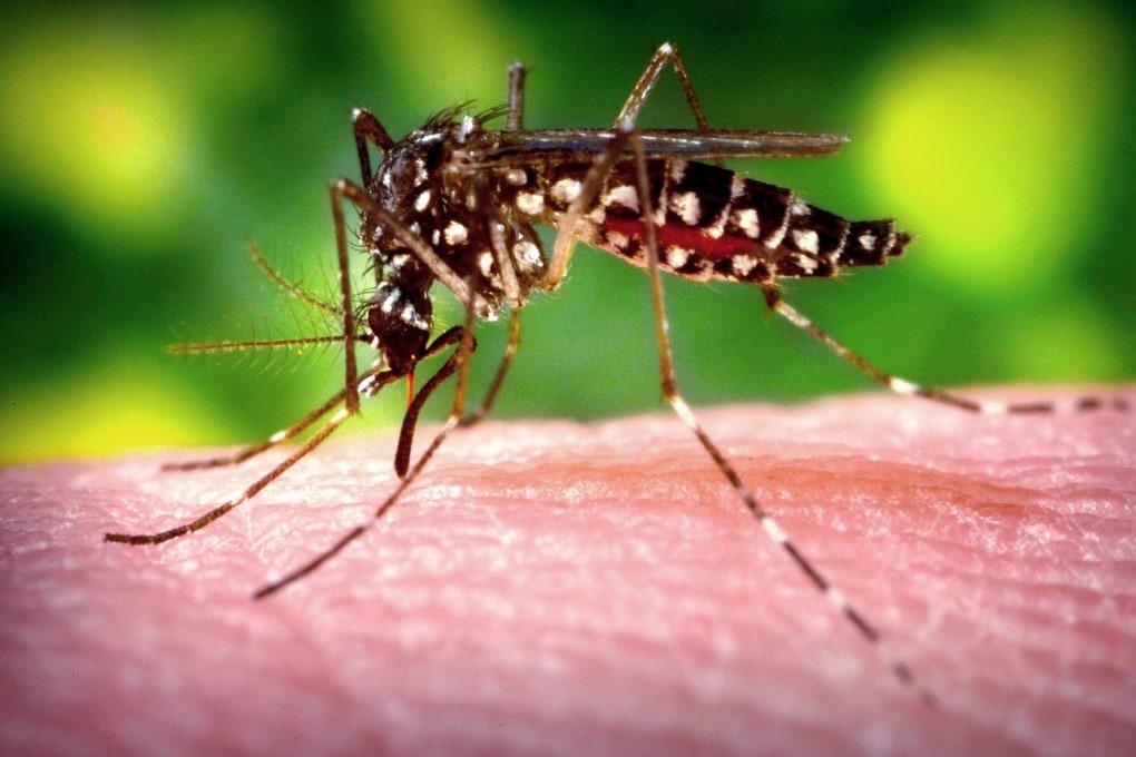 Possiamo diventare invisibili alle zanzare?