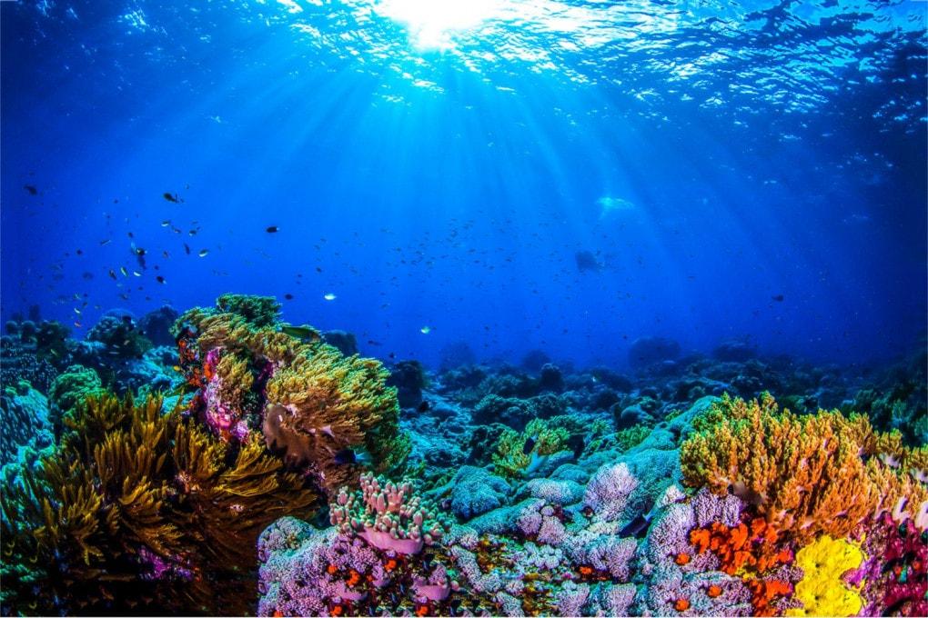 Una cartolina dalla Grande Barriera Corallina, sulla Terra: i grandi mondi oceano di stelle lontane nascondono scenari simili?