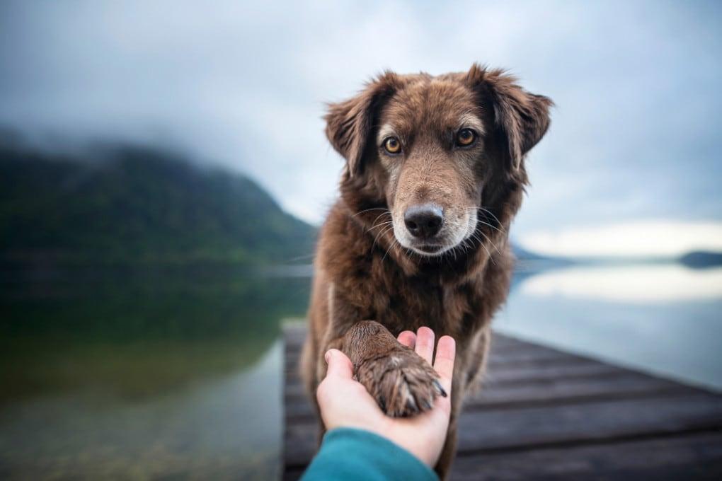Il nostro cane percepisce le nostre emozioni e, nel caso, ci sta alla larga.