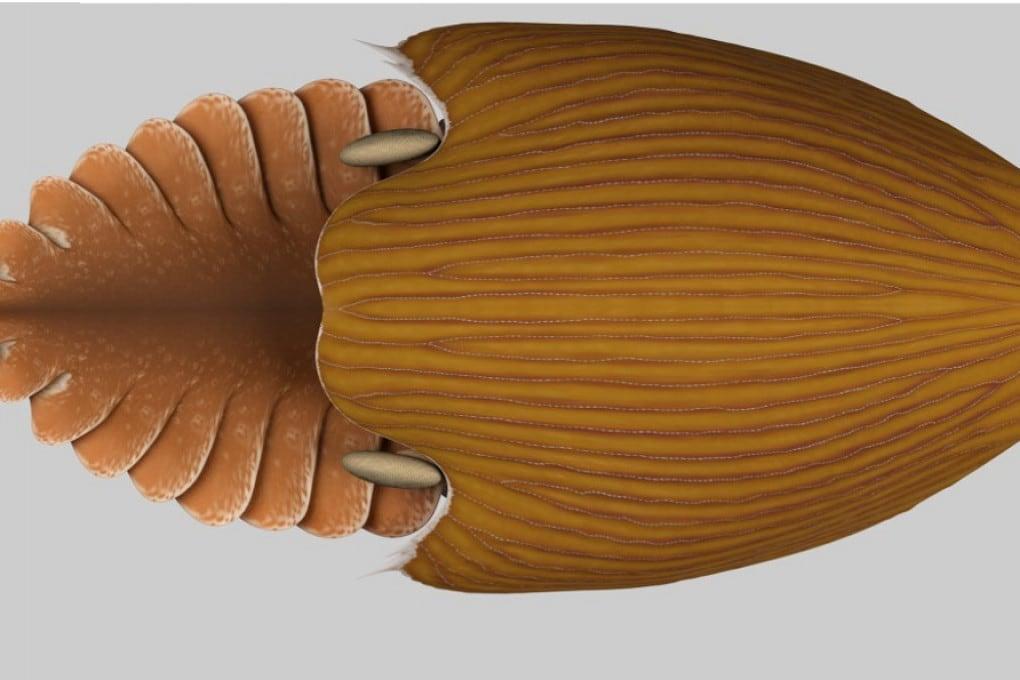 Ricostruzione 3D di Titanokorys ganiesi.