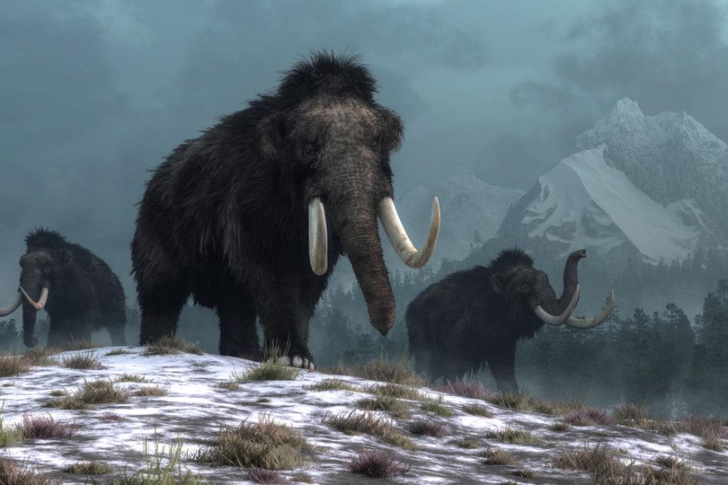 Mammut lanosi (ricostruzione 3D).
